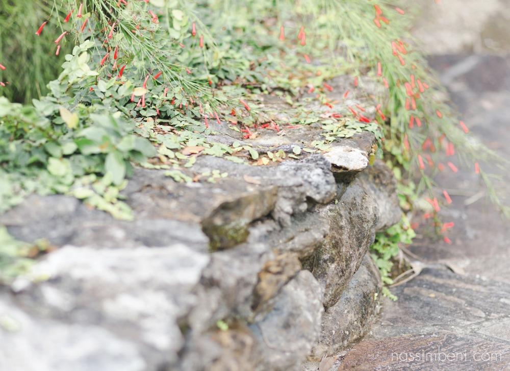 McKee-botanical-gardens-engagement-photos-by-central-florida-photographer-karen-nassimbeni-of-nassimbeni-photogrpahy-