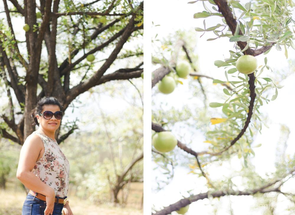 photo of a semilla de jicaro tree in managua, nicaragua taken by karen nassimbeni of nassimbeni photography