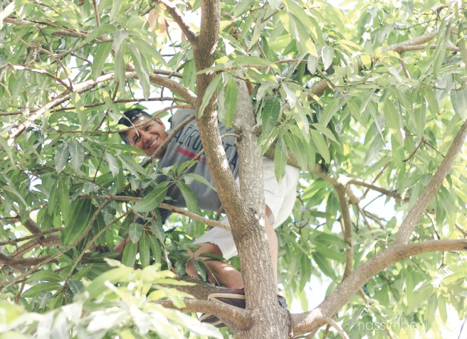 dad climbing mango tree in esteli nicaragua, taken by karen nassimbeni