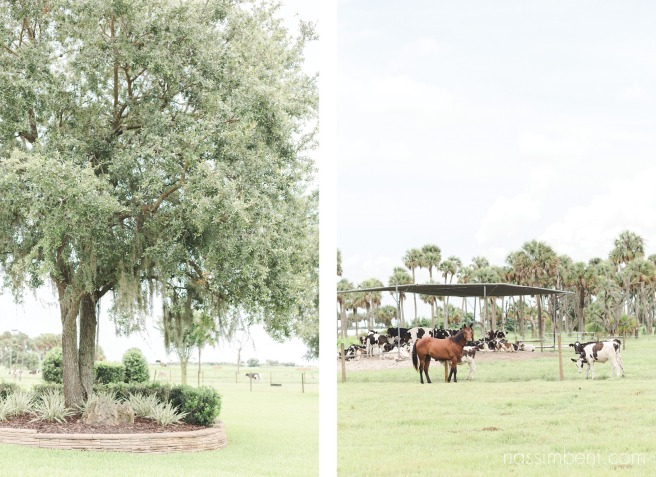 milking r dairy farm okeechobee wedding by nassimbeni photography