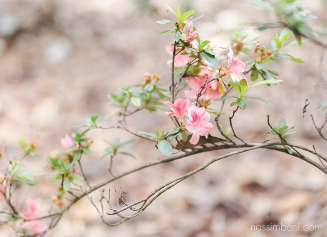 bok tower gardens by nassimbeni photography