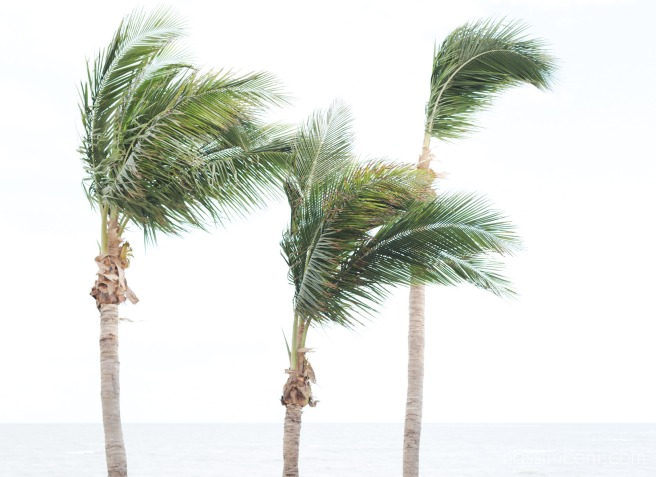 Krimpton vero beach hotel and spa palm trees at wedding on the beach by nassimbeni photography