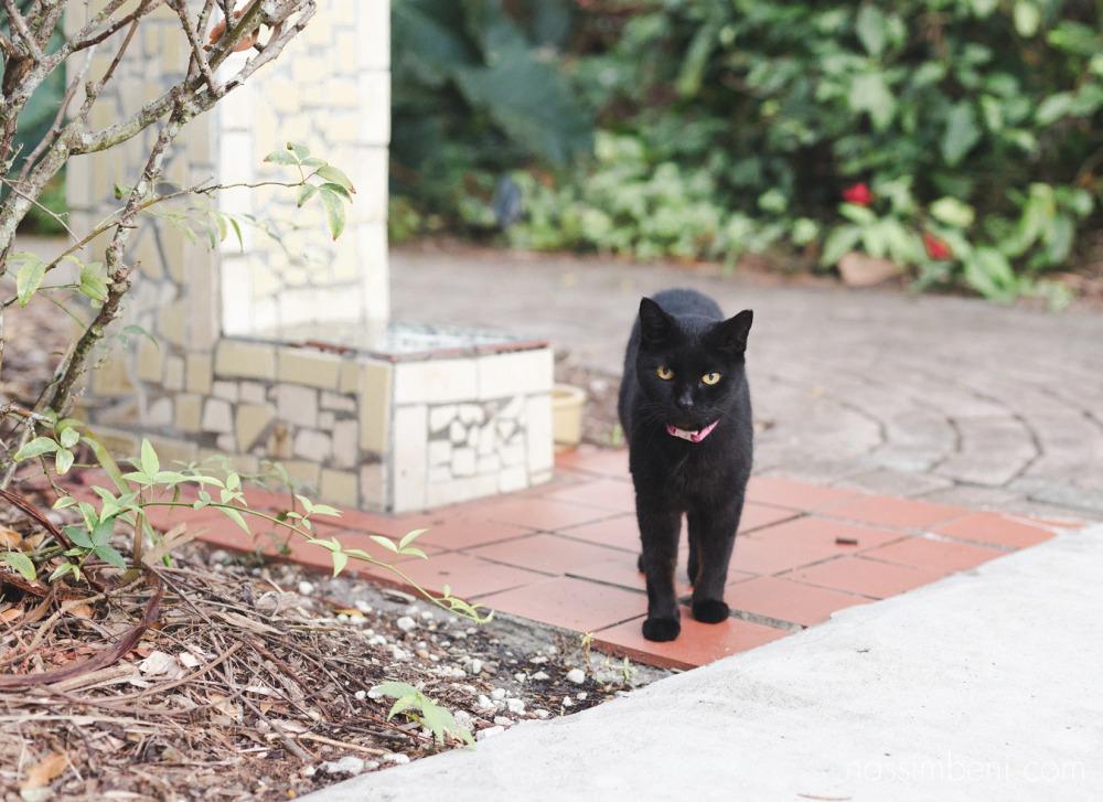 resident cat at heathcote botanical garden by Nassimbeni Photography